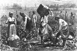 Cotton Picking in Georgia